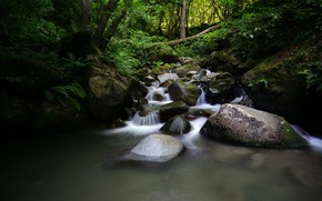 Picture forest, water, stream, stones