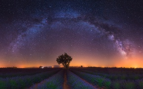 Picture field, stars, light, flowers, night, tree, the milky way, lavender