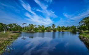 Picture greens, the sky, trees, pond, Park, palm trees, blue, USA, Melbourne, Wickham Park