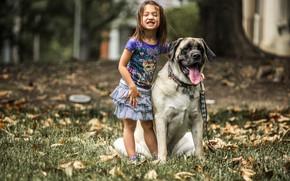 Wallpaper mood, dog, girl