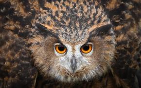Wallpaper eyes, owl, bird, looks