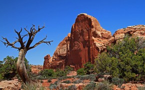 Picture rock, tree, Utah, USA, Canyonlands
