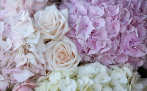 Picture macro, roses, hydrangea