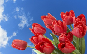 Picture the sky, clouds, flowers
