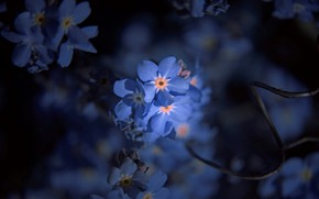 Picture blur, forget-me-nots, in the dark