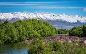 Picture greens, the sky, grass, the sun, trees, flowers, mountains, river, New Zealand, the bushes, snowy …