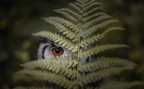 Wallpaper sheet, owl, fern, eyes, bird