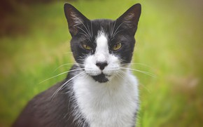 Picture eyes, cat, mustache, look