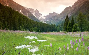 Picture the sky, mountains, meadow
