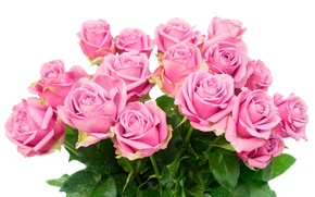 Wallpaper roses, bouquet, roses, flowers, pink roses, pink
