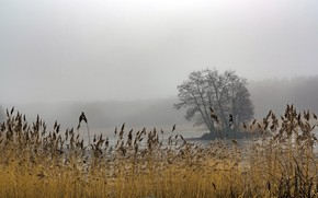 Picture fog, lake, reed