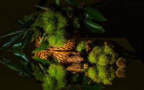 Picture leaves, style, reflection, still life, chestnut