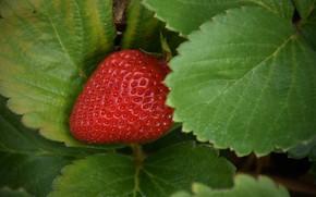 Picture Macro, Strawberry, Strawberry, Macro