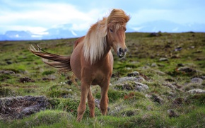 Picture nature, horse, beauty