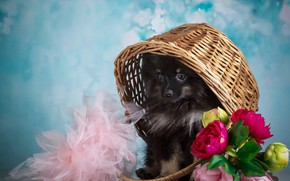 Picture flowers, background, animal, puppy