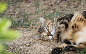 Picture look, legs, cat