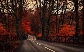 Picture road, autumn, forest, trees, the fence