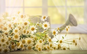 Picture light, flowers, chamomile