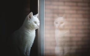 Wallpaper window, house, cat