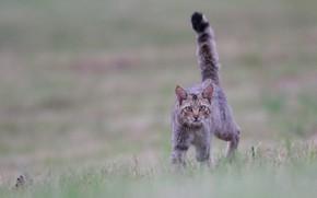 Wallpaper cat, tail pipe, bokeh, look, cat
