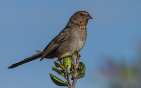 Wallpaper branch, California towy, birds