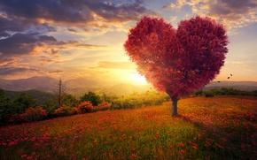 Picture field, the sky, grass, love, flowers, tree, heart, love, field, landscape, heart, pink, blossom, flowers, …