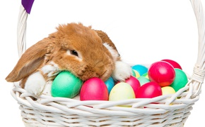 Picture basket, rabbit, Easter, happy, rabbit, spring, Easter, eggs, bunny, decoration, the painted eggs