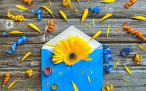 Picture flower, paper, the envelope
