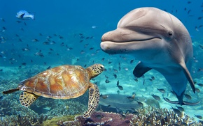 Wallpaper Dolphin, turtle, water, animals, fish