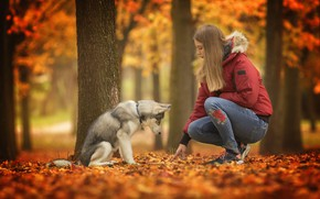 Wallpaper dog, girl, autumn