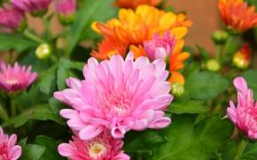Picture Macro, Pink flower, Pink flower