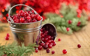 Picture branches, berries, Board, needles, cranberry, bucket