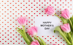 Picture flowers, tulips, pink, fresh, pink, flowers, tulips, spring, tender, mother's Day
