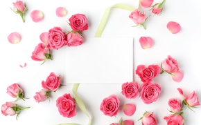 Wallpaper roses, buds, pink, flowers, romantic, roses, valentine`s day