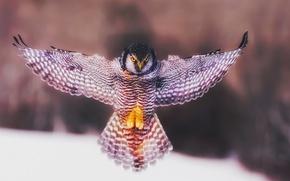 Picture owl, bird, wings, angel, flap