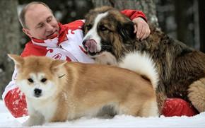 Wallpaper game, dogs, frienship, Putin, winter