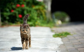 Picture cat, the sun, street
