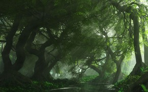 Picture forest, trees, river, vegetation, the rays of the sun