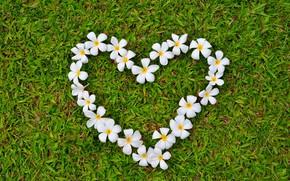 Picture grass, love, flowers, heart, love, grass, heart, romantic, plumeria, plumeria