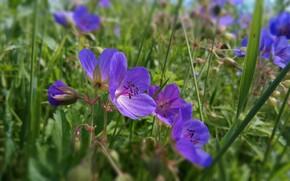 Picture summer, macro, Flower