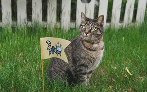 Picture cat, grass, cat, the fence, astronaut, flag, the suit, cat, the box, 8k+