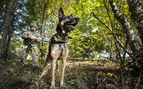 Picture dog, army, soldiers