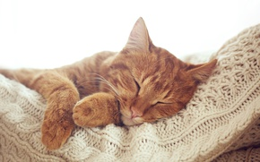 Wallpaper cat, cat, paws, red, muzzle, sleeping, resting