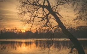 Picture twilight, sunset, lake, tree, sun, dusk, branches