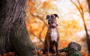 Picture autumn, nature, dog
