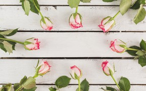 Picture flowers, roses, buds, flower, wood, beautiful, pretty, romantic, roses, composition