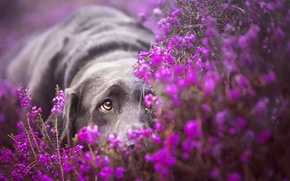 Picture look, flowers, dog