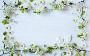 Wallpaper flowers, chamomile, branches, background