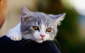 Picture eyes, cat, baby