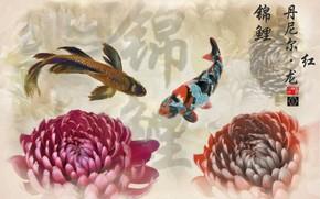 Picture fish, Japan, characters, chrysanthemum, koi